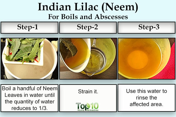 Indian lilac neem for boils and abscesses