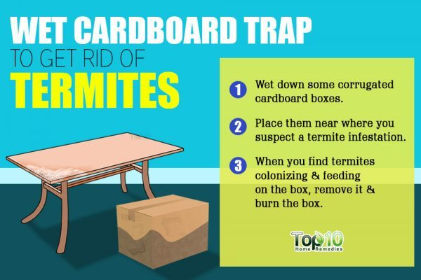 wet carboard trap for termites