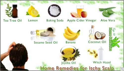 Home Remedy Quick Stop For Dogs