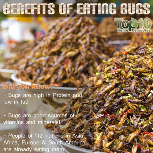 Benefits of eating bugs