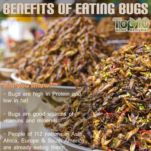 bugs eating benefits