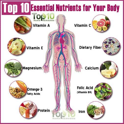essential nutrients human body