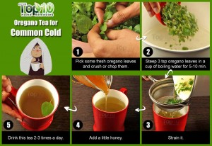 oregano tea for common cold