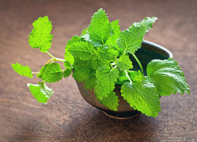 http://www.top10homeremedies.com/wp-content/uploads/2014/06/lemon-balm-bkg-opt.jpg