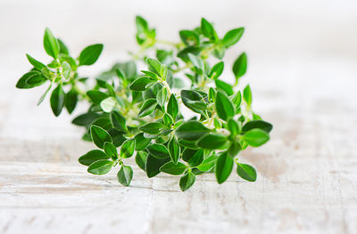 http://www.top10homeremedies.com/wp-content/uploads/2014/09/thyme-fresh-leaves-opt.jpg