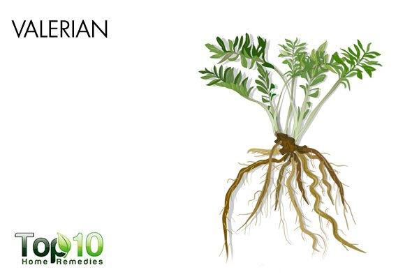 valerian for anxiety and panic attacks