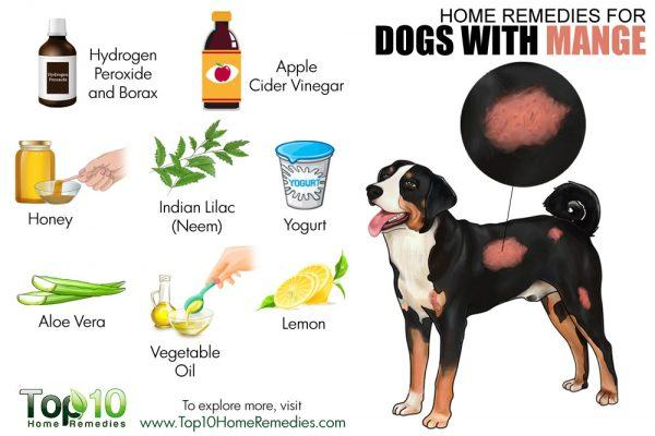 Mange Cure Dogs Natural