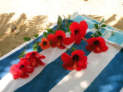 Hibiscus flowers on the towel