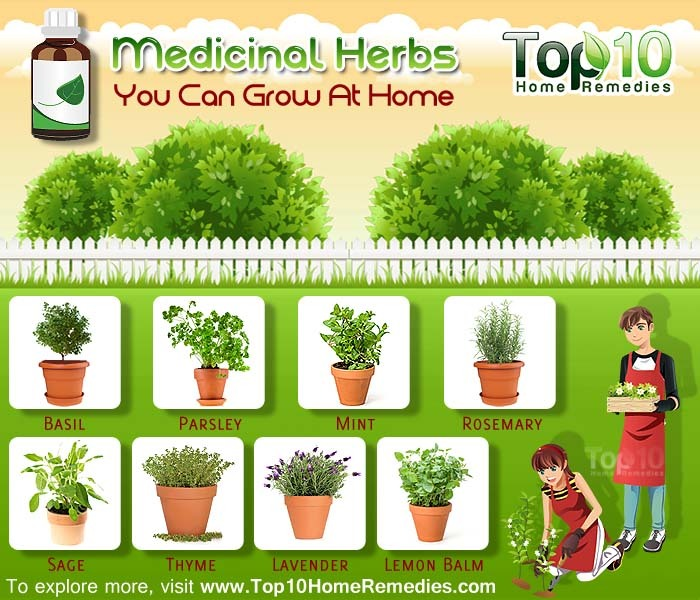10 Medicinal Herbs You Can Grow At Home Top 10 Home Remedies