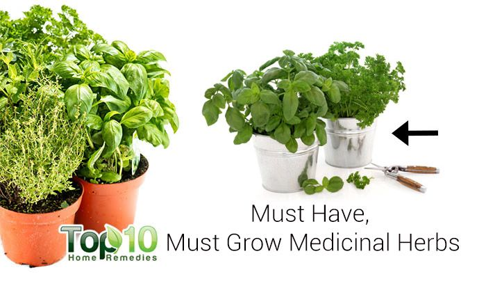 10 medicinal herbs you can grow at home page 2 of 3 top 10 home remedies - Aromatic herbs pots multiple benefits ...