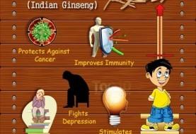 Top 10 Health Benefits of Ashwagandha (Indian Ginseng)