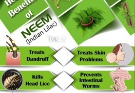 Top 10 Health Benefits of Neem (Indian Lilac)