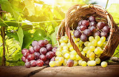 grapes-falling-from-basket-opt