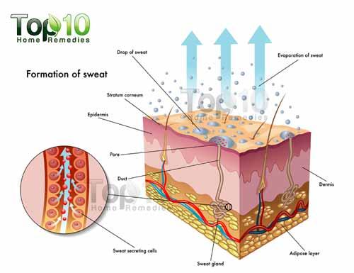 Sweating diagram