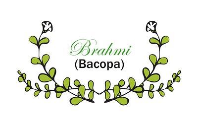 bacopa brahmi