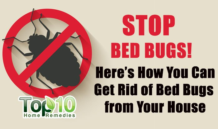 Can You Spread Bed Bugs From House To House