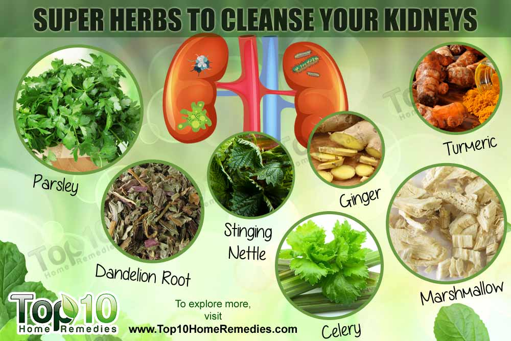 top 10 super herbs to cleanse your kidneys top 10 home