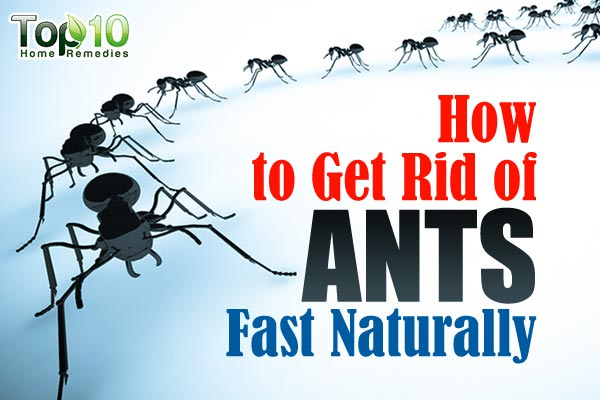 ants feat top 10 home remedies. Black Bedroom Furniture Sets. Home Design Ideas