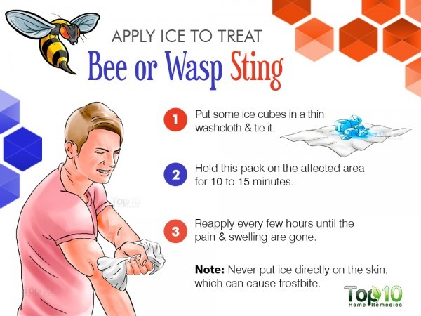 apply ice on bee or wasp sting