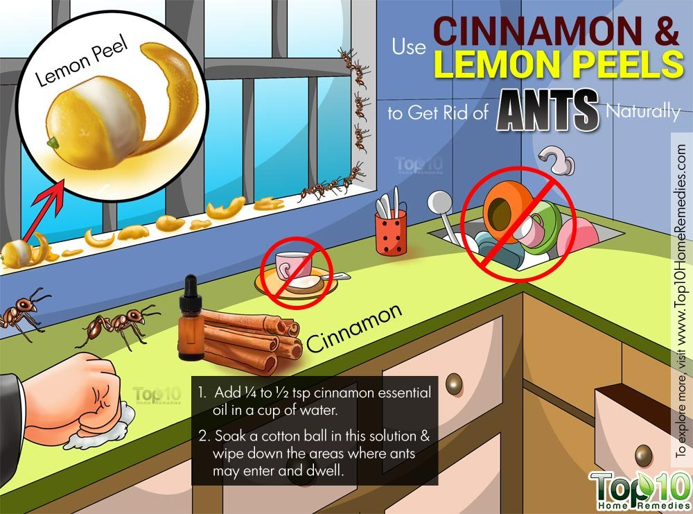 Naturally Get Rid Of Black Ants