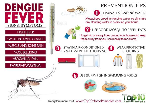 dengue fever signs and symptoms and prevention