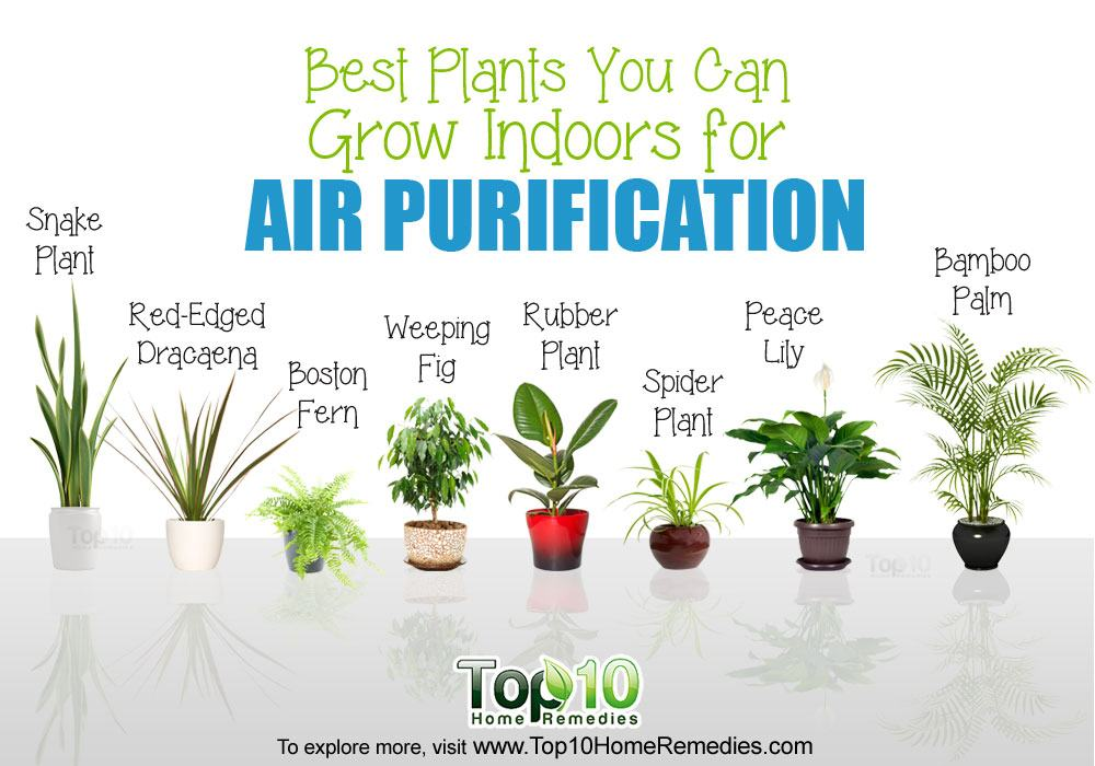10 best plants you can grow indoors for air purification for Best garden plants
