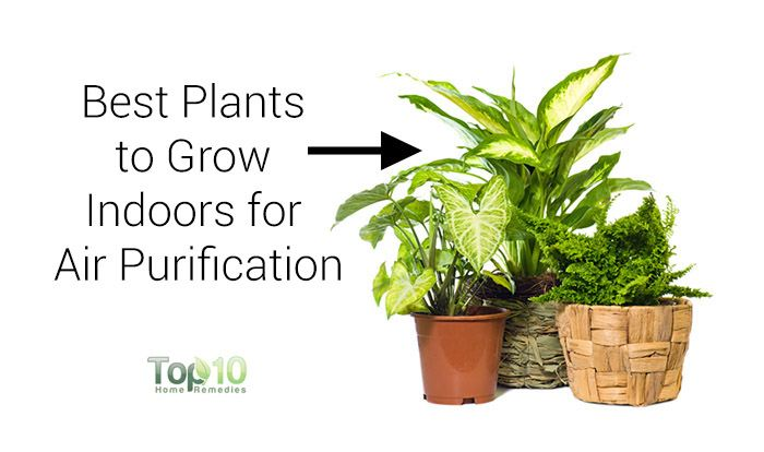 10 Best Plants You Can Grow Indoors For Air Purification Top Home Remes