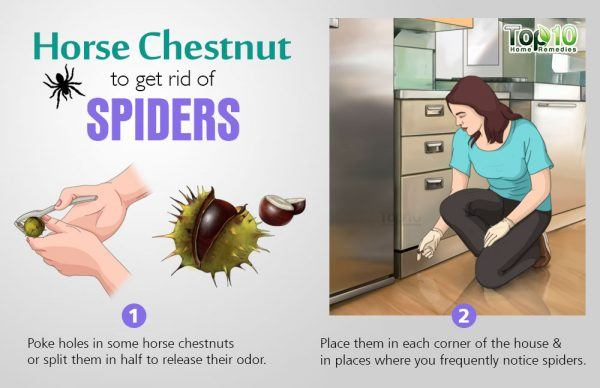 How To Safely Get Rid Of Spiders From Your House Top 10