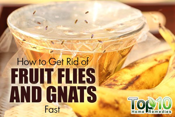 Home Remedy To Get Rid Of Gnats In The Kitchen