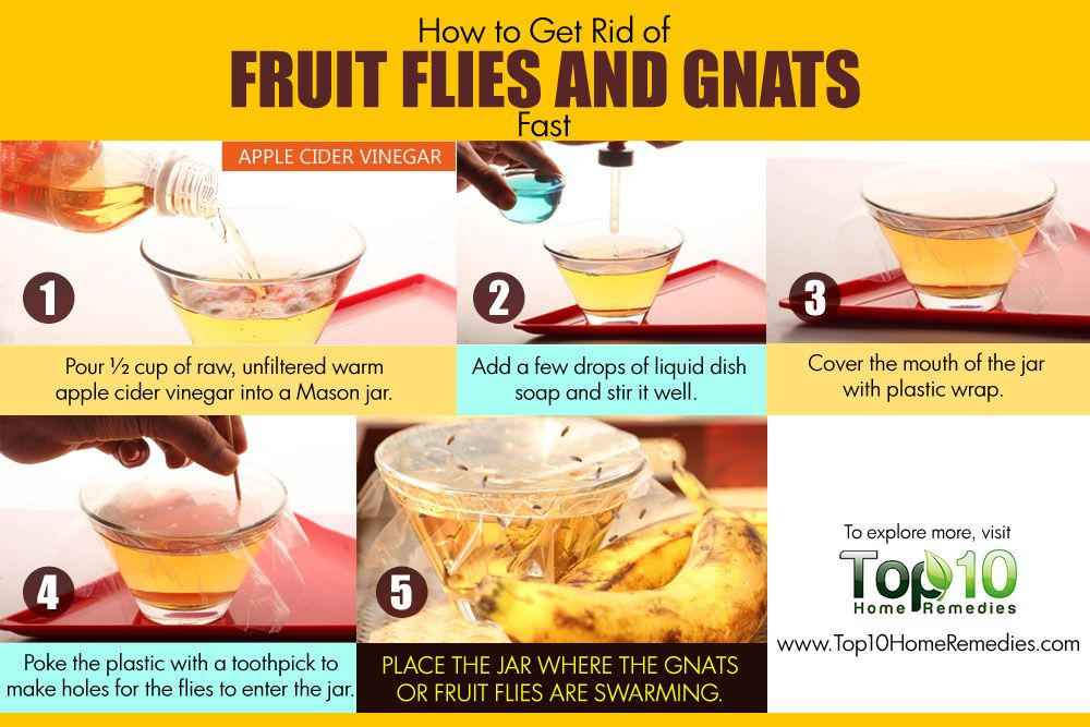How To Get Rid Of Fruit Flies And Gnats Fast Top 10 Home Remedies
