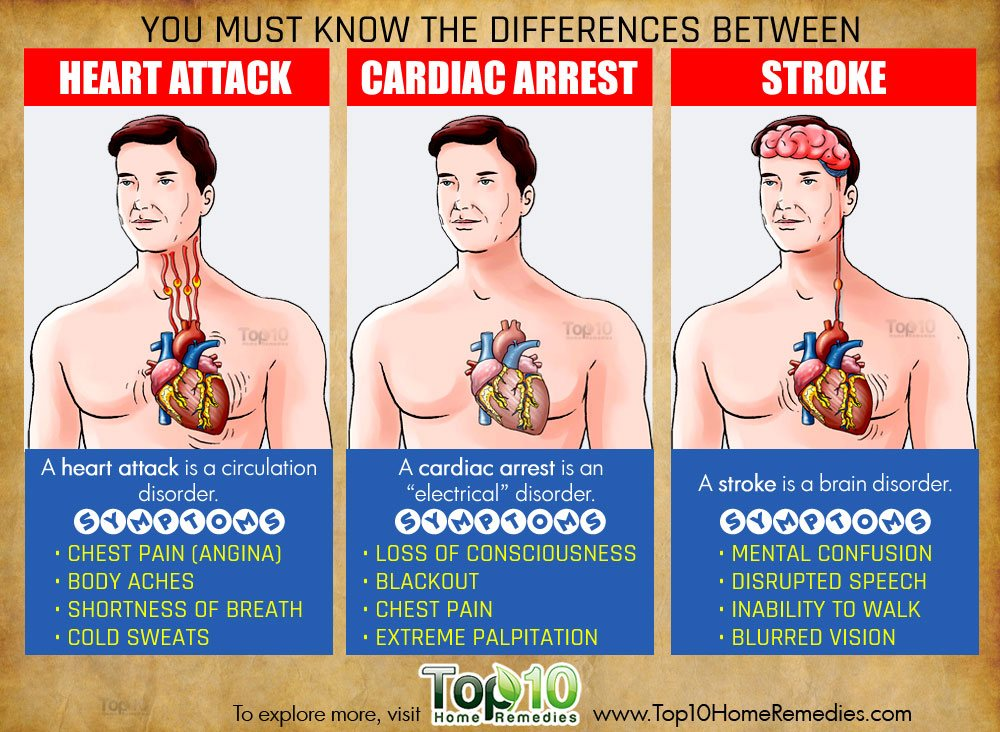what is the relationship between heart attack and stroke