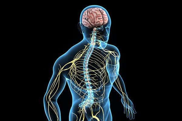 strengthen nervous system