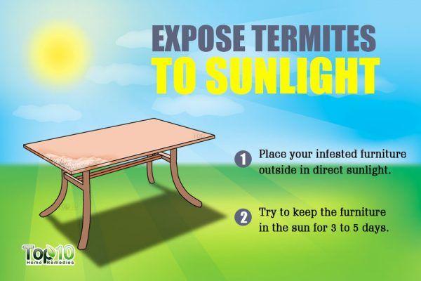 expose termites to sunlight
