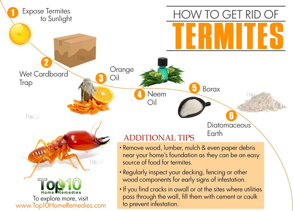 How To Get Rid Of Termite Natural Way