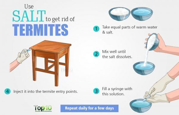use salt to get rid of termites