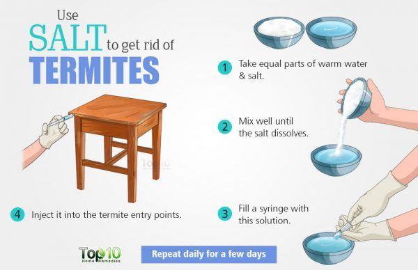 use salt to get rid of termites