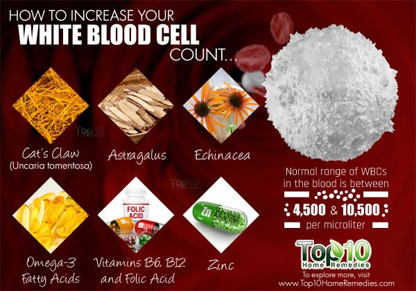 how to increase white blood cell count