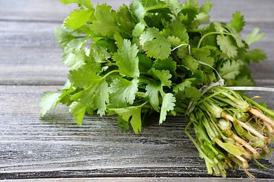consume cilantro