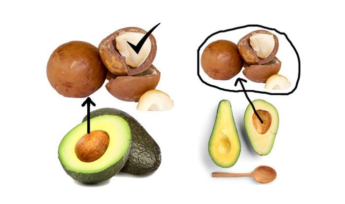 10 Surprising Benefits Of Avocado Seeds Top 10 Home Remedies