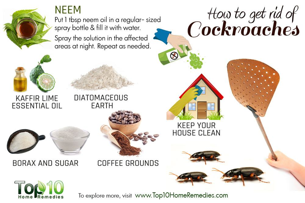 How To Get Rid Of Cockroaches Top 10 Home Remedies
