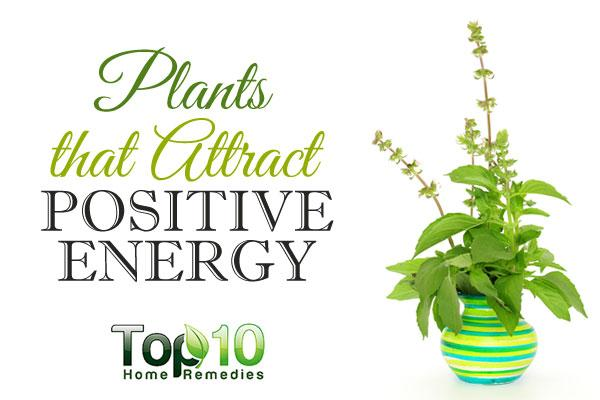 10 plants that attract positive energy top 10 home remedies. Black Bedroom Furniture Sets. Home Design Ideas