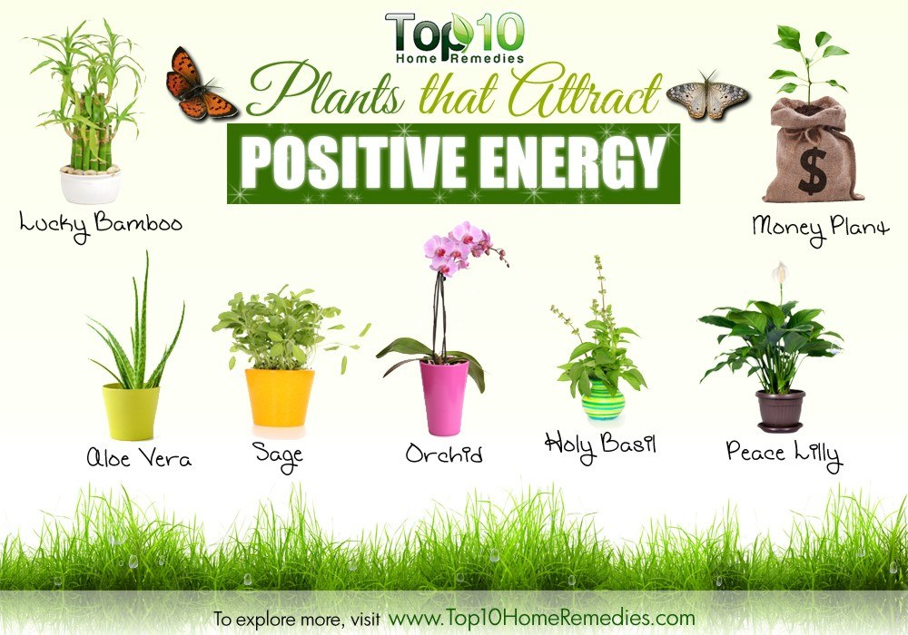 10 plants that attract positive energy top 10 home remedies Negative energy in house