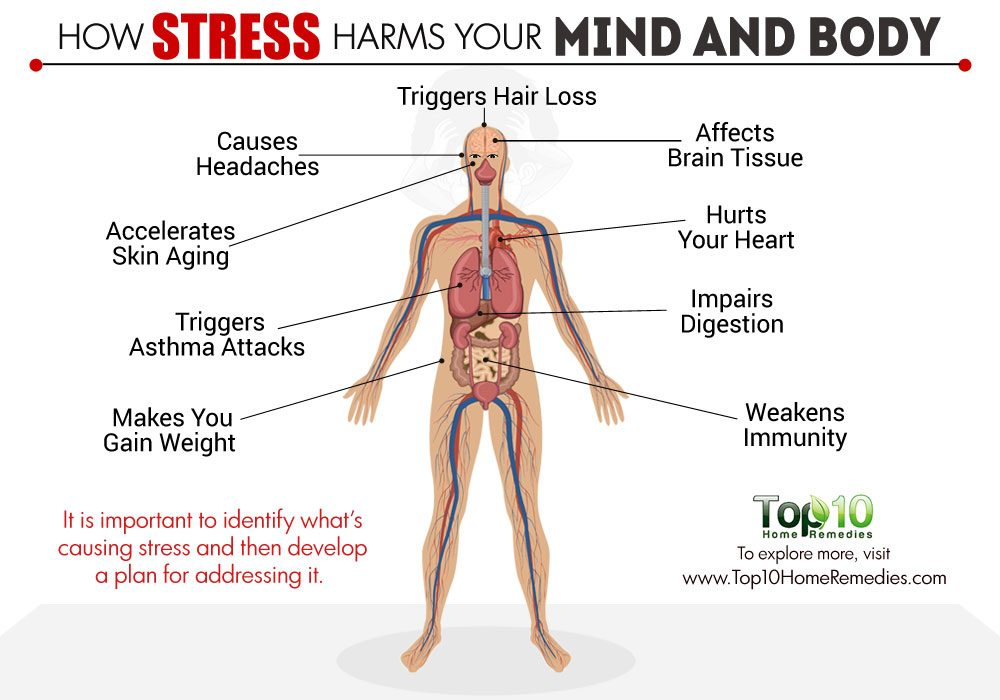 the effect of stress on our Stress and illness stress responses have an effect on digestive systemduring stress digestion is inhibited after stress digestive activity increases this may affect the health of digestive system and cause ulcers.