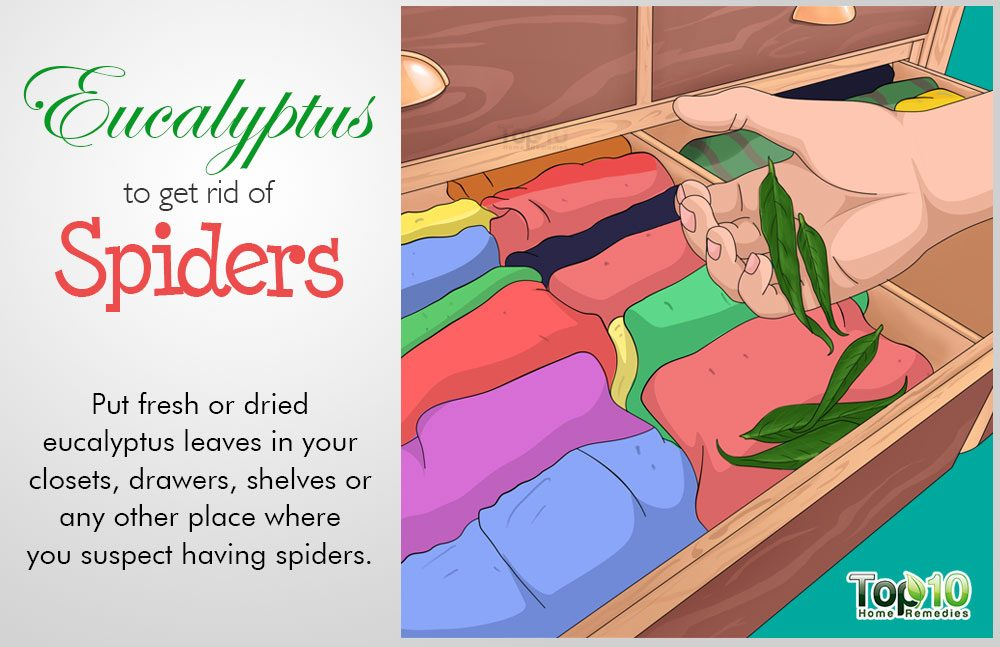 How to Safely Get Rid of Spiders from Your House | Top 10 ...