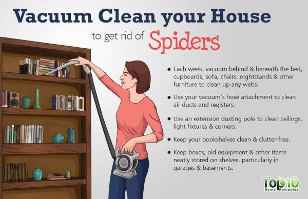 vacuum clean your house to get rid of spiders