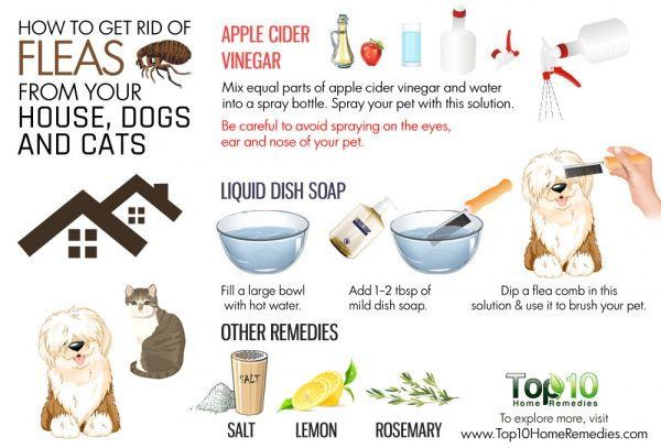 how to get rid of fleas from your house and pets