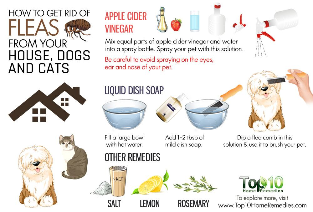 Remove Fleas From Dog Home Remedies