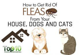 How to Get Rid of Fleas from Your House, Dogs and Cats