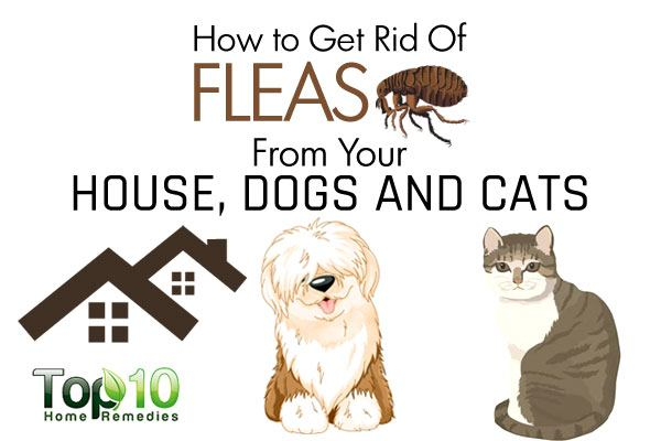 How to Get Rid of Fleas from Your House, Dogs and Cats | Top 10 ...