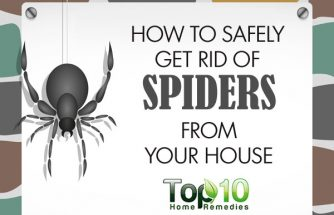 Top 10 home remedies for How to get rid of spiders in house